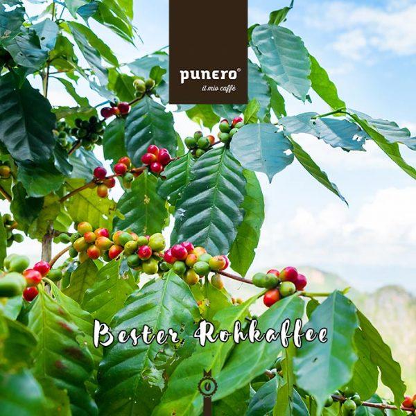 punero geröstet mit besten Rohkaffee